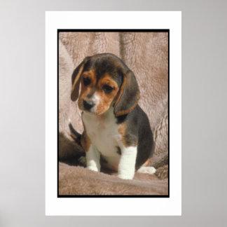 Het Poster van het Puppy van de brak