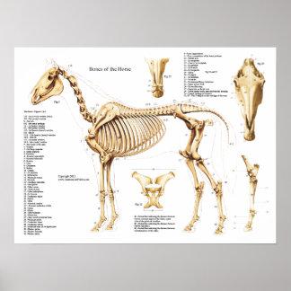 Het Poster van het Skelet van de Anatomie van het