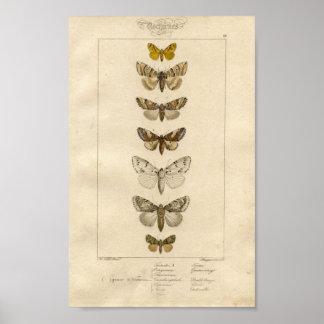 Het Poster van het Specimen van Nocturnes