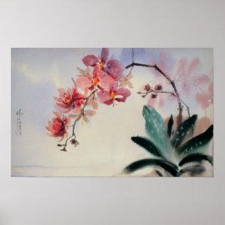 Het Poster van Phalaenopsis