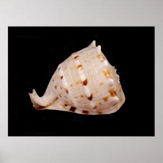 Het Poster van Shell van de kroonslak