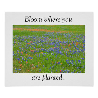 Het Poster van Texas Wildflowers
