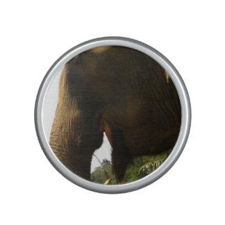 Het Profiel van de olifant