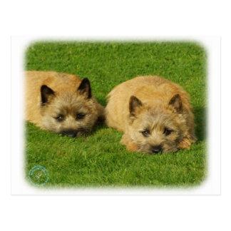 Het puppy 9W048D-007 van Terrier van de steenhoop Briefkaart