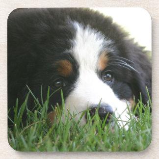 Het Puppy van Bernese Onderzetter