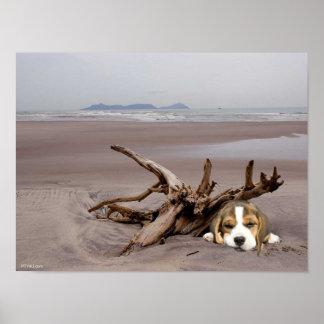 Het Puppy van de brak op het Poster van het Strand