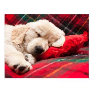 Het Puppy van de slaap op Plaid Briefkaart