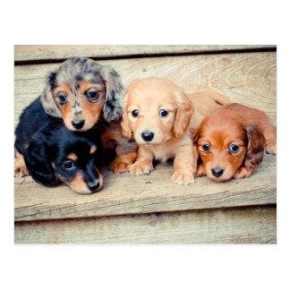 Het Puppy van de tekkel Briefkaart