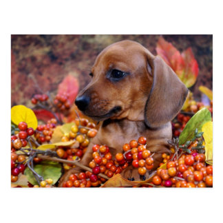 Het Puppy van de Tekkel van de herfst Briefkaart