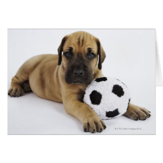 Het Puppy van great dane met de Bal van het Kaart