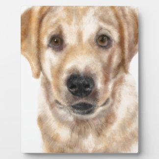Het puppy van het golden retriever fotoplaat