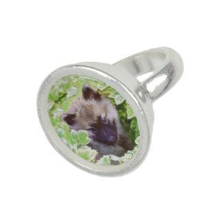 Het Puppy van Keeshond Foto Ringen
