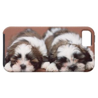 Het Puppy van Tzu van Shih Tough iPhone 5 Hoesje