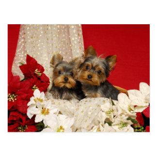 Het puppy van Yorkie met Poinsettia Briefkaart