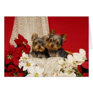 Het puppy van Yorkie met Poinsettia Wenskaart
