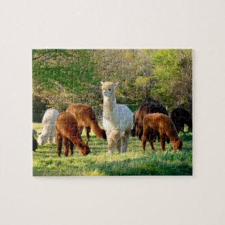 Het Raadsel van de alpaca met de Doos van de Gift Puzzel