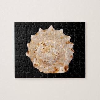 Het Raadsel van de Foto van Shell van de kroonslak Puzzel
