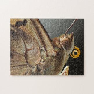 Het Raadsel van de Vlinder van Leilia van de Puzzel