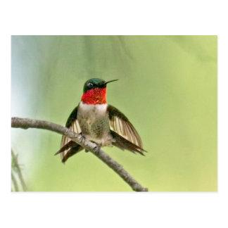 Het Regelen van de kolibrie op een Tak Briefkaart