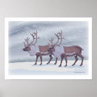Het Rendier van de kariboe in de Sneeuw Poster