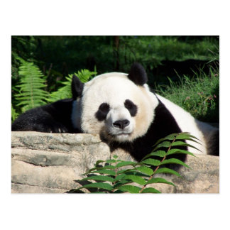 Het reuze Dutten van de Panda Briefkaart