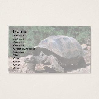 Het reuze Koepelvormige Lopen van de Schildpad Visitekaartjes