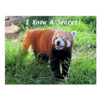 Het rode Geheim van de Panda Briefkaart
