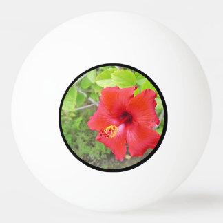 Het rode Gele stigma van de Hibiscus Pingpongbal