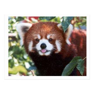 Het rode Lachen van de Panda Briefkaart