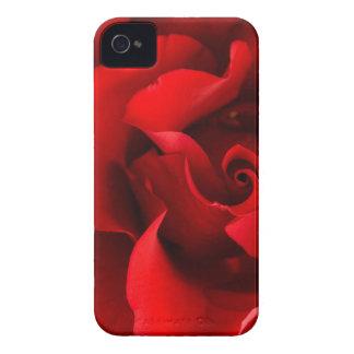 Het rood nam met de Daling van de Dauw op Wit iPhone 4 Hoesje