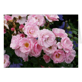 Het roze nam toe briefkaarten 0