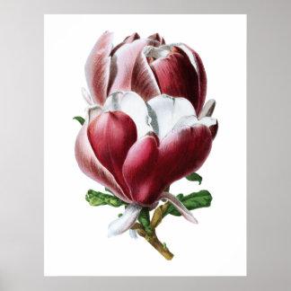 Het roze poster van magnolia grote bloemen