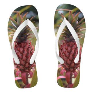 Het roze Teenslipper van de Ananas Teenslippers