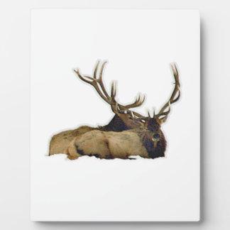 Het rusten stierenelanden fotoplaat