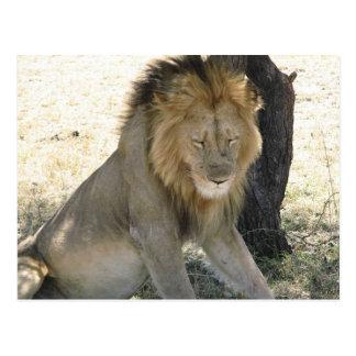 Het Rusten van de leeuw Briefkaart