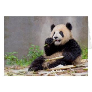 Het schattige het Knagen aan van de Panda Briefkaarten 0