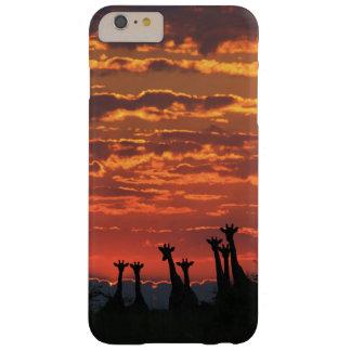 Het Silhouet van de giraf - de Hemel van de Brand Barely There iPhone 6 Plus Hoesje
