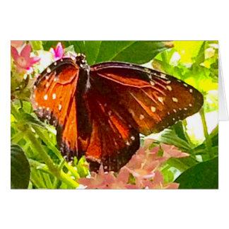 Het Sinaasappel en de Zwarte van de vlinder Briefkaarten 0