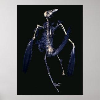 Het Skelet van de vogel Poster