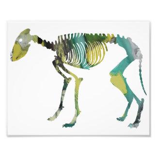 Het skelet van de wolf foto prints