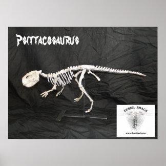 Het Skelet van Psittacosaurus Poster