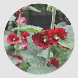 Het slaan van de Donkerrode Bloemen Althea Rosa Ronde Sticker