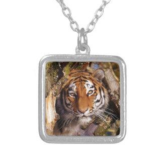 Het Sluimeren van de tijger Roofdier Mooie Zilver Vergulden Ketting