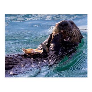 Het smakken van de Otter van het Zee Briefkaart