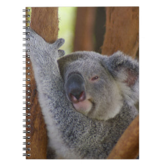 Het snoezige Notitieboekje van de Koala Ringband Notitieboek