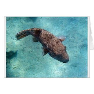 het snorkelen in het rode zee wenskaart