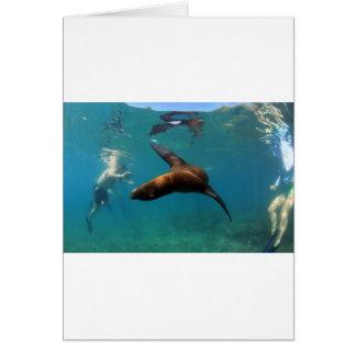 Het snorkelen met de speelse Eilanden van de zeele Wenskaart