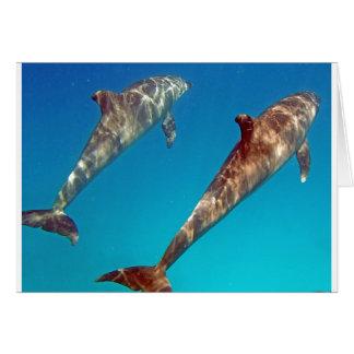 het snorkelen met dolfijn wenskaart