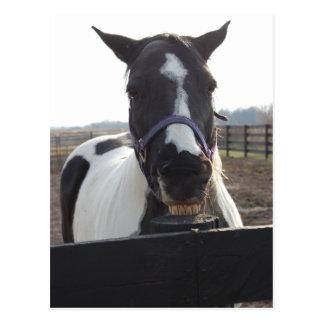 Het speelse Pinto Paard van de Verf Briefkaart