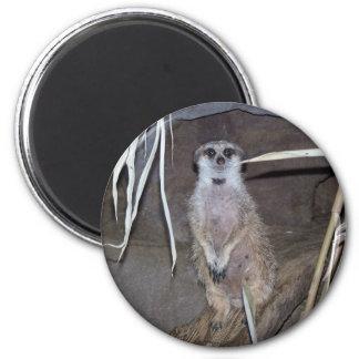 Het Staren van Meerkat Magneet